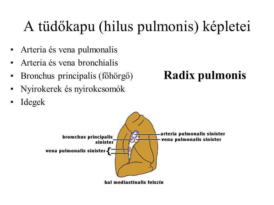 A tüdőkapu (hilus pulmonis) képletei