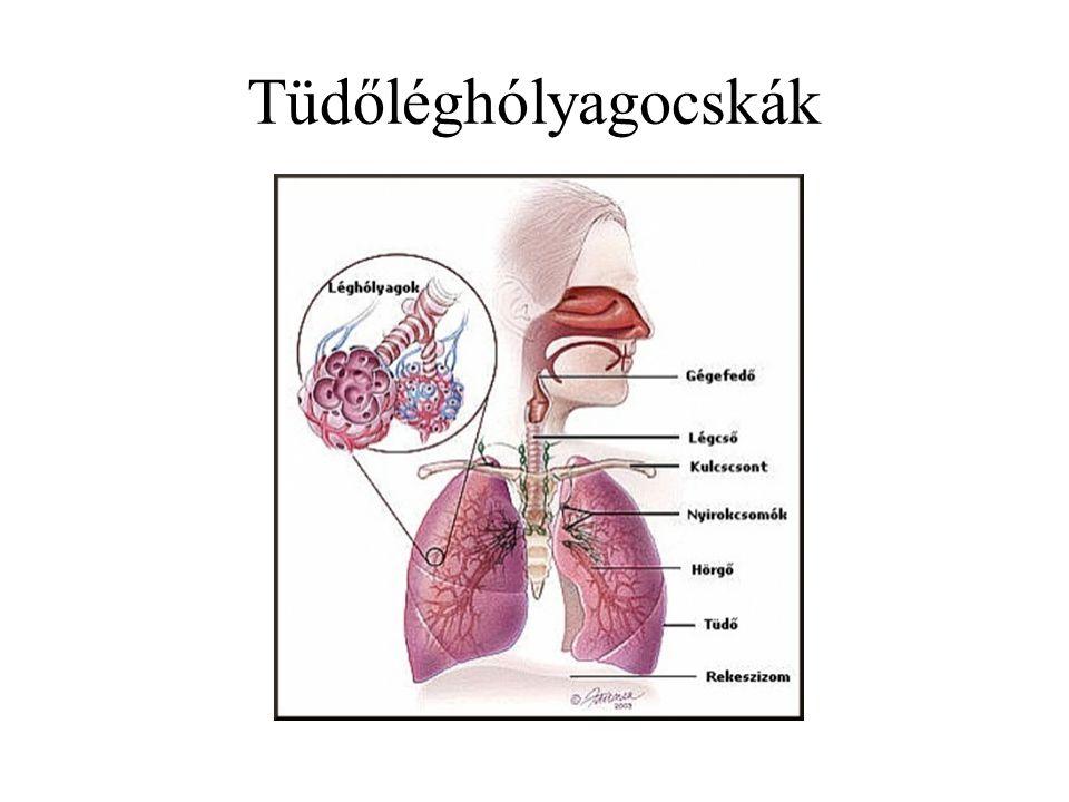 Tüdőléghólyagocskák