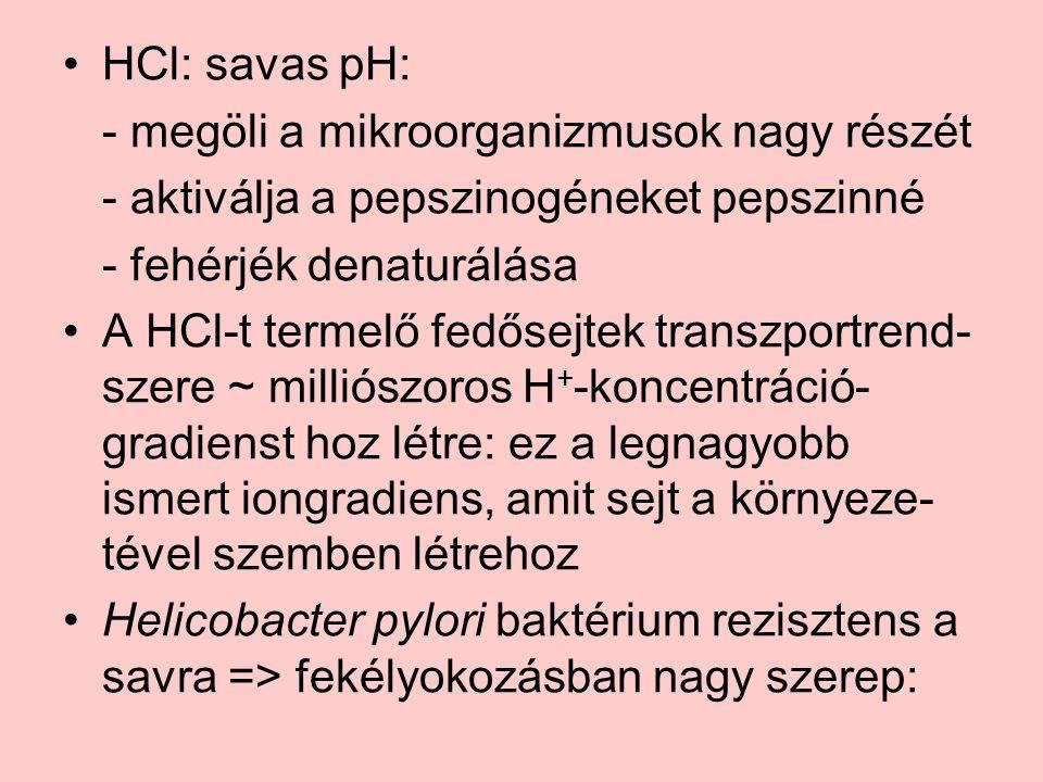 HCl: savas pH: - megöli a mikroorganizmusok nagy részét. - aktiválja a pepszinogéneket pepszinné. - fehérjék denaturálása.