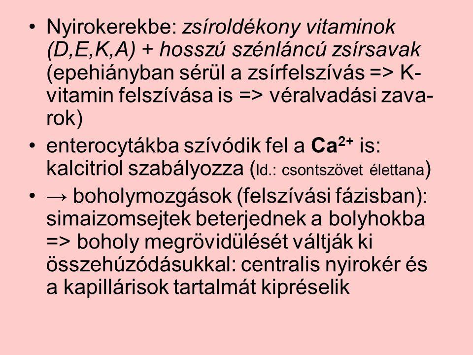 Nyirokerekbe: zsíroldékony vitaminok (D,E,K,A) + hosszú szénláncú zsírsavak (epehiányban sérül a zsírfelszívás => K-vitamin felszívása is => véralvadási zava-rok)