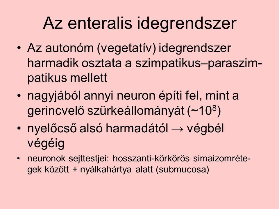 Az enteralis idegrendszer