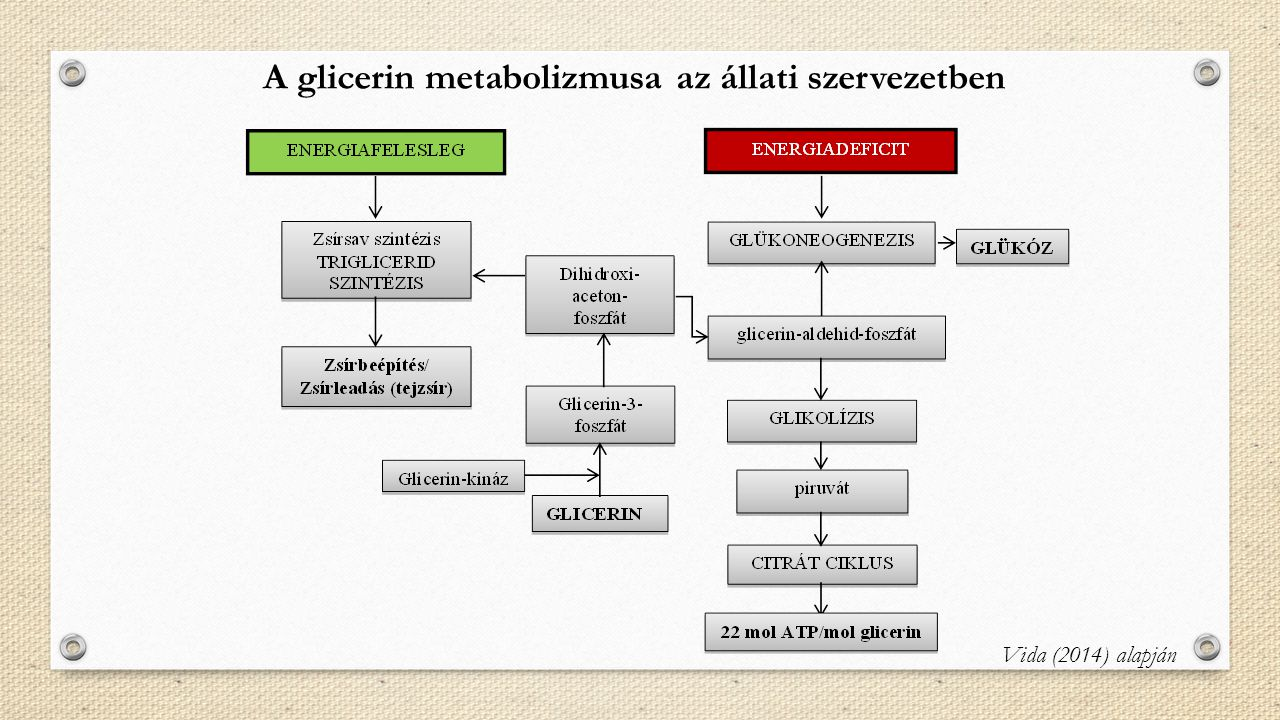 A glicerin metabolizmusa az állati szervezetben