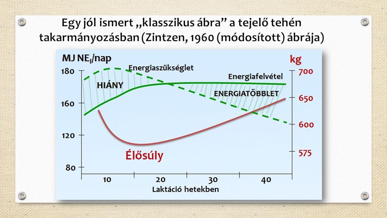 """Egy jól ismert """"klasszikus ábra a tejelő tehén takarmányozásban (Zintzen, 1960 (módosított) ábrája)"""