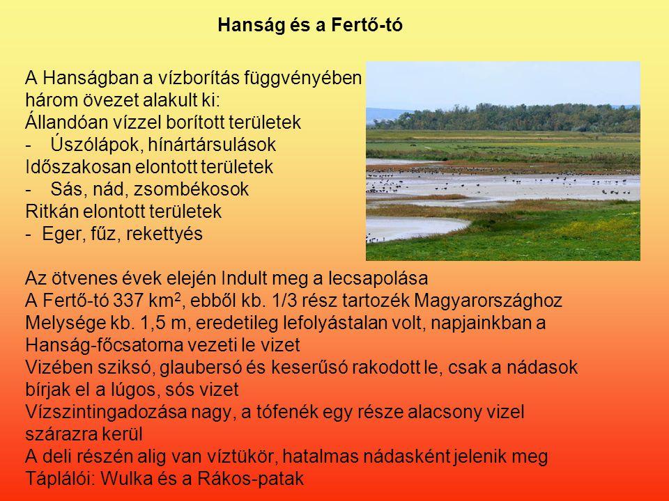 Hanság és a Fertő-tó A Hanságban a vízborítás függvényében. három övezet alakult ki: Állandóan vízzel borított területek.