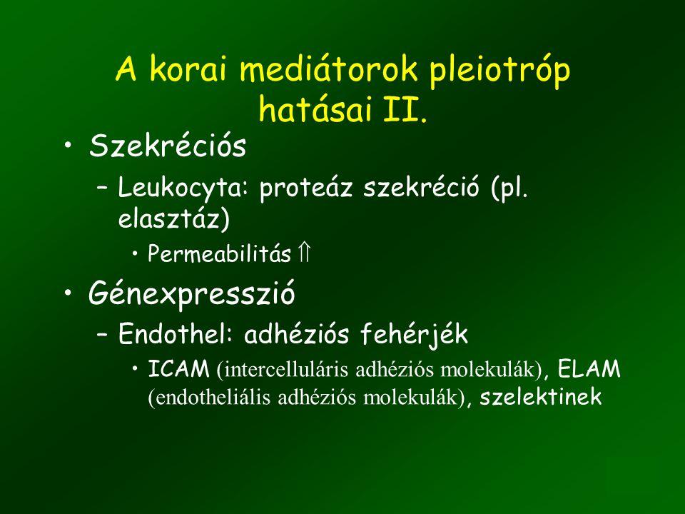 A korai mediátorok pleiotróp hatásai II.