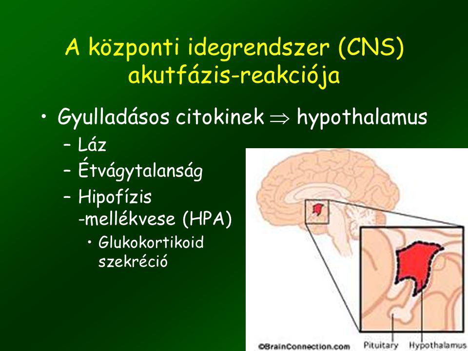 A központi idegrendszer (CNS) akutfázis-reakciója