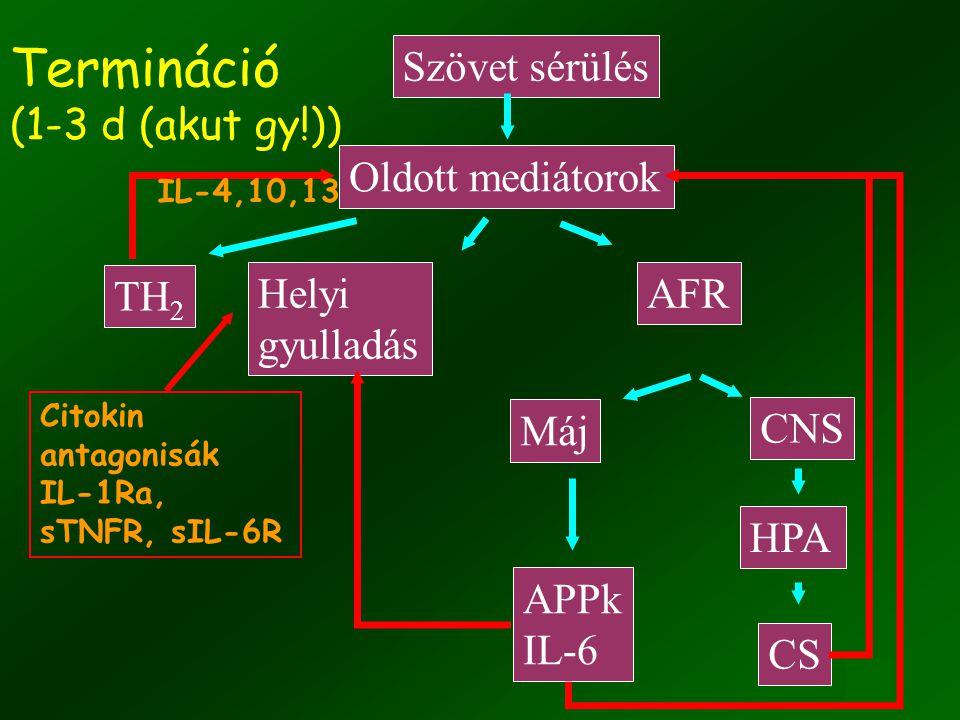 Termináció (1-3 d (akut gy!))