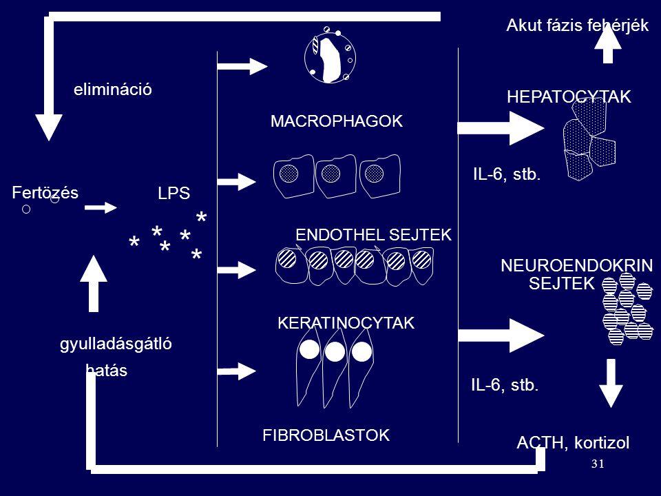 * * * * * * Akut fázis fehérjék elimináció HEPATOCYTAK IL-6, stb.