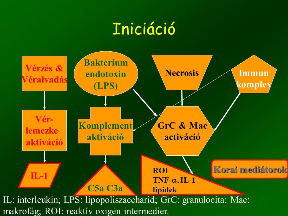 Iniciáció Bakterium endotoxin (LPS) Komplement aktiváció C5a C3a