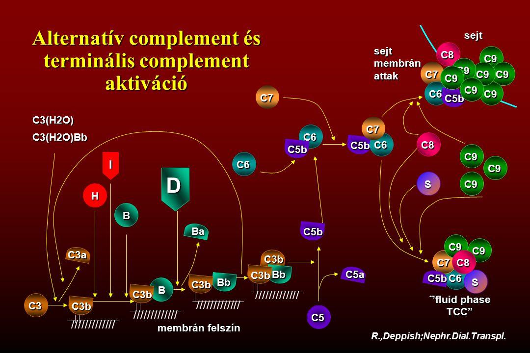 Alternatív complement és terminális complement