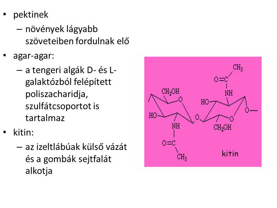 növények lágyabb szöveteiben fordulnak elő agar-agar: