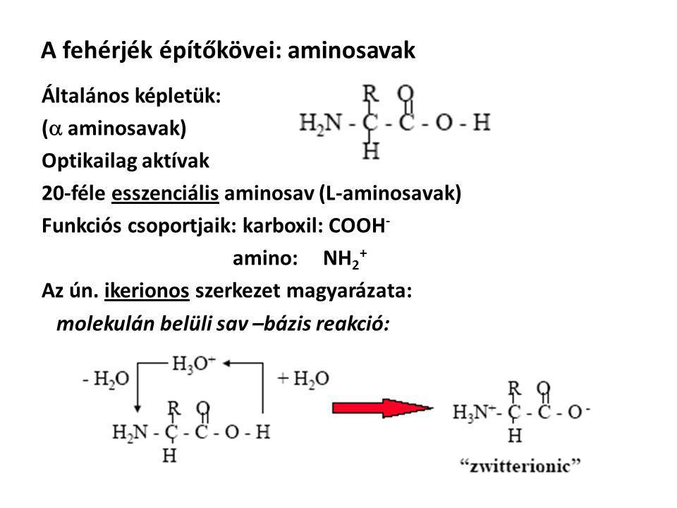 A fehérjék építőkövei: aminosavak