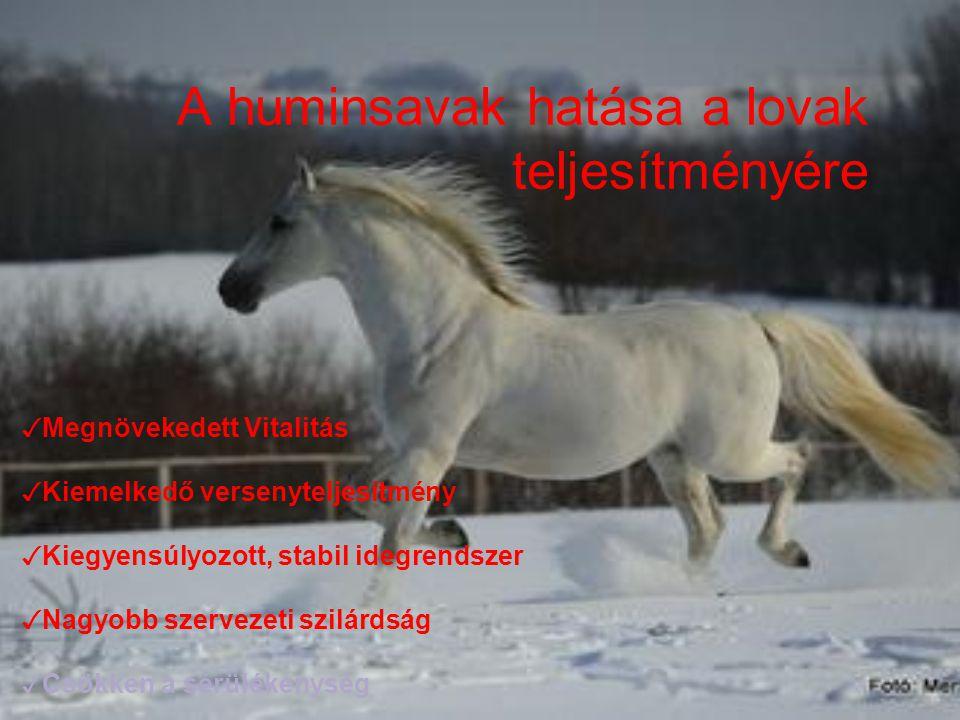 A huminsavak hatása a lovak teljesítményére