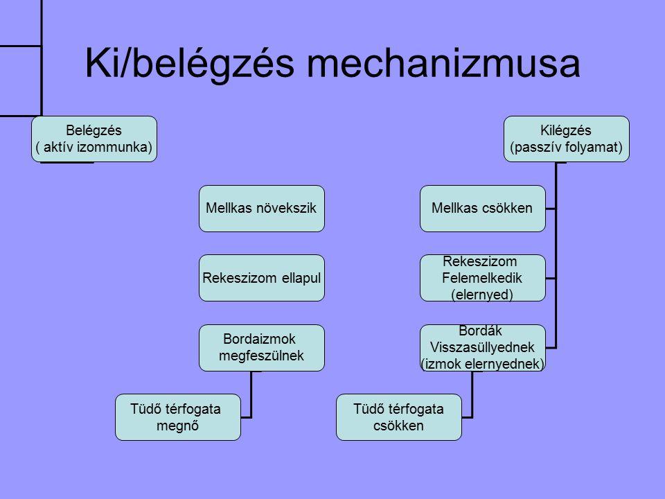 Ki/belégzés mechanizmusa