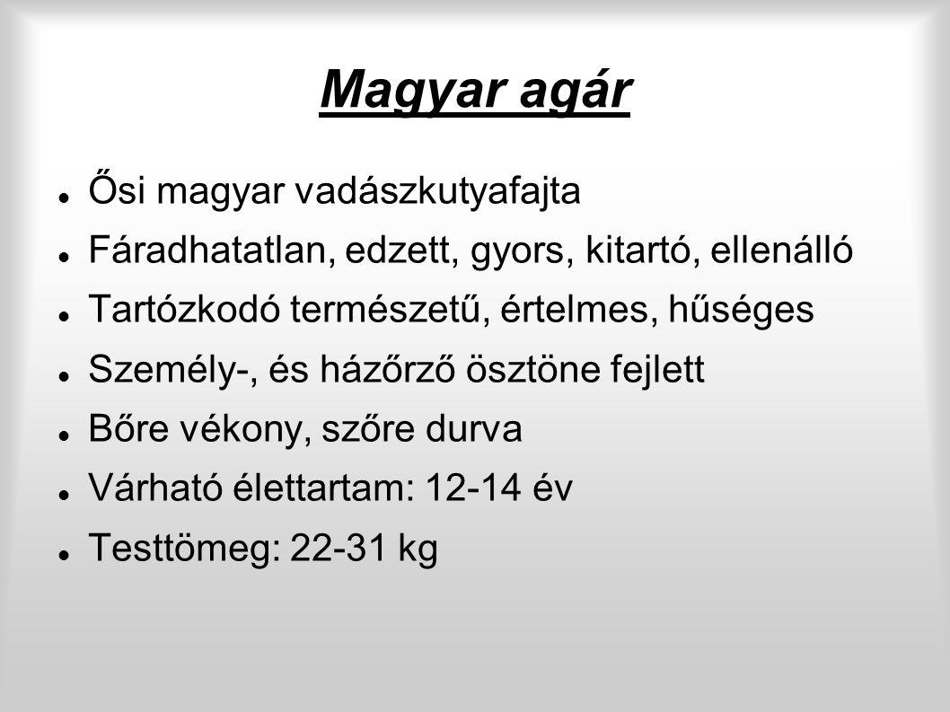 Magyar agár Ősi magyar vadászkutyafajta