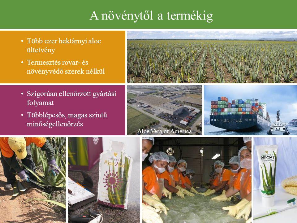 A növénytől a termékig • Több ezer hektárnyi aloe ültetvény