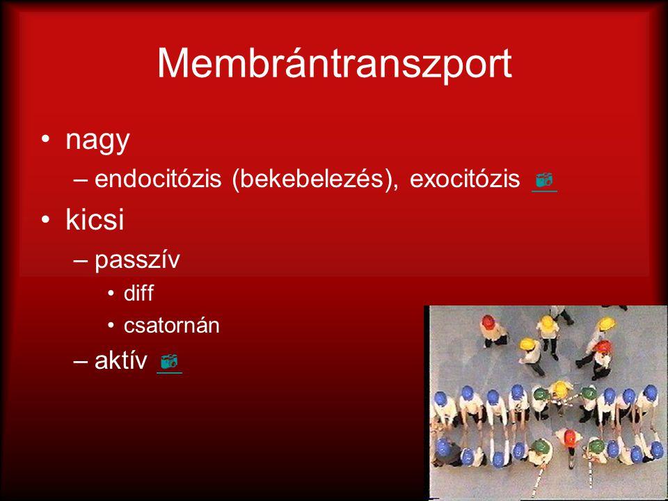 Membrántranszport nagy kicsi endocitózis (bekebelezés), exocitózis 