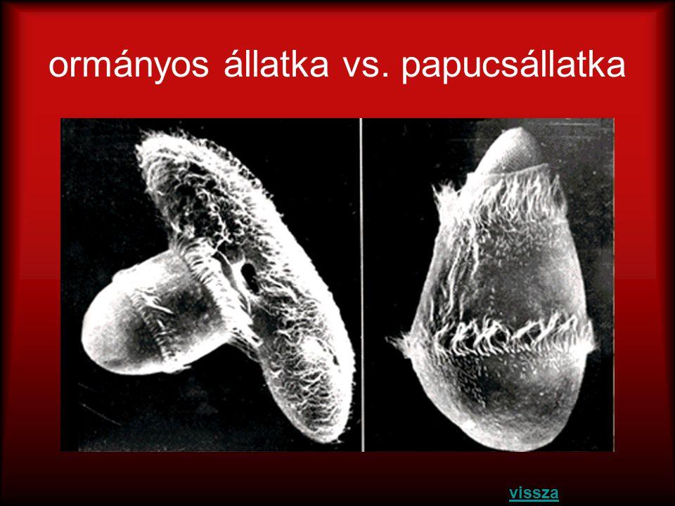 ormányos állatka vs. papucsállatka
