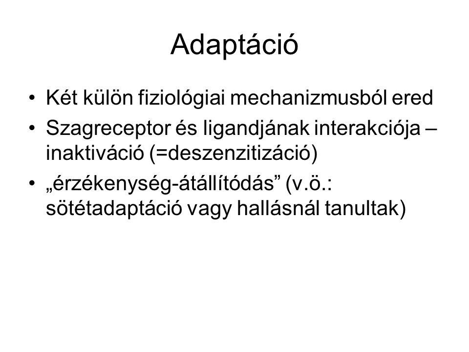 Adaptáció Két külön fiziológiai mechanizmusból ered