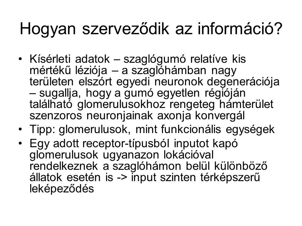 Hogyan szerveződik az információ