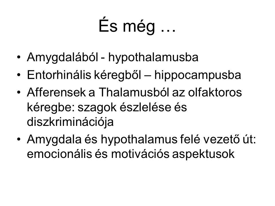 És még … Amygdalából - hypothalamusba