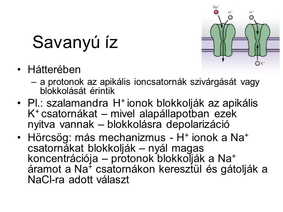 Savanyú íz Hátterében. a protonok az apikális ioncsatornák szivárgását vagy blokkolását érintik.