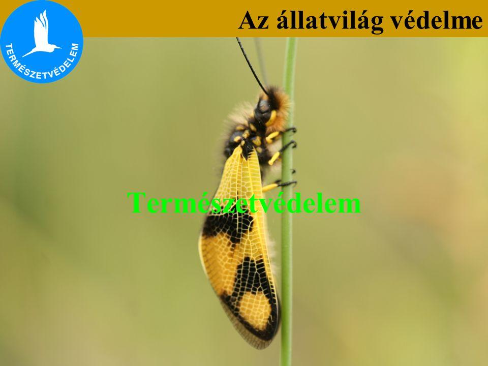 Az állatvilág védelme Természetvédelem