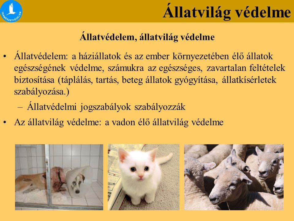 Állatvédelem, állatvilág védelme