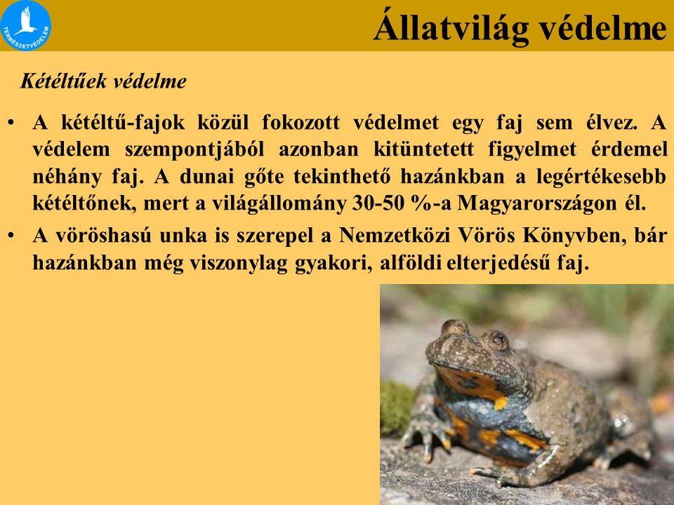 Állatvilág védelme Kétéltűek védelme