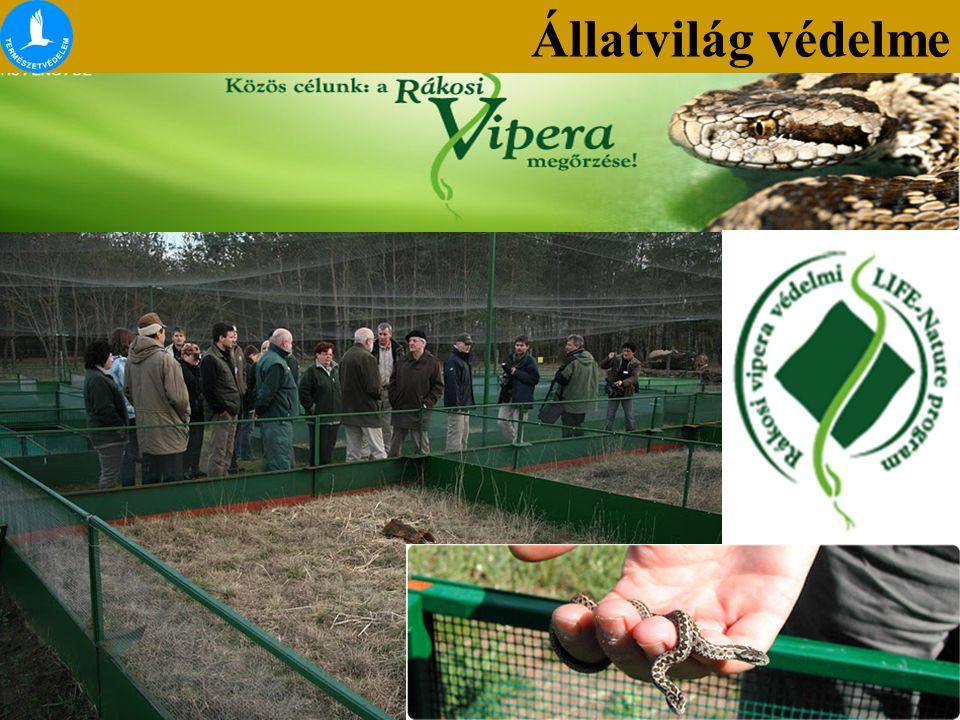 Állatvilág védelme Hüllők védelme