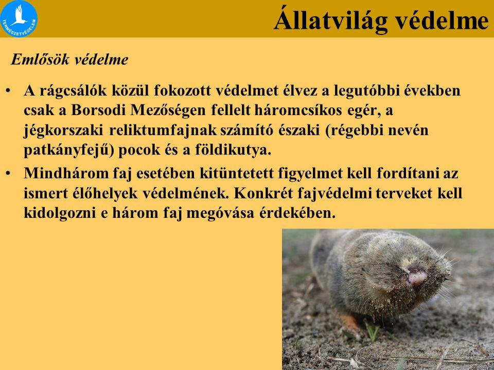 Állatvilág védelme Emlősök védelme