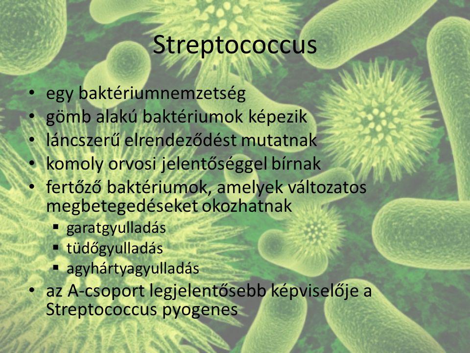 Streptococcus egy baktériumnemzetség gömb alakú baktériumok képezik