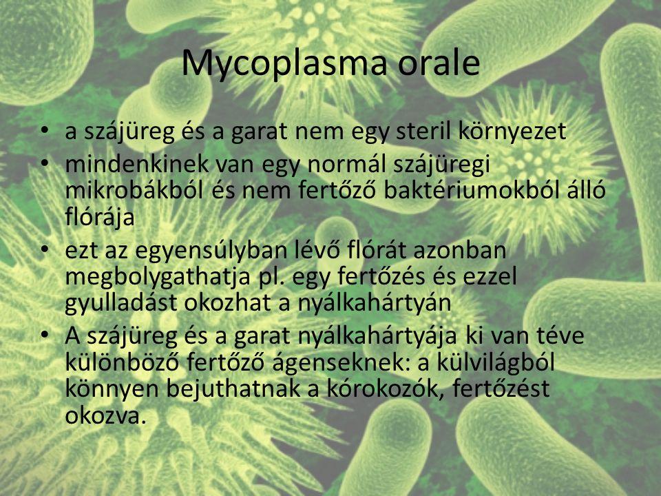 Mycoplasma orale a szájüreg és a garat nem egy steril környezet