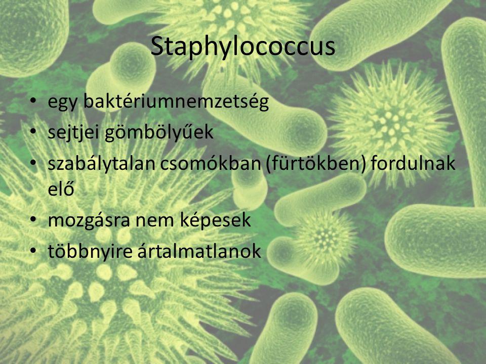 Staphylococcus egy baktériumnemzetség sejtjei gömbölyűek