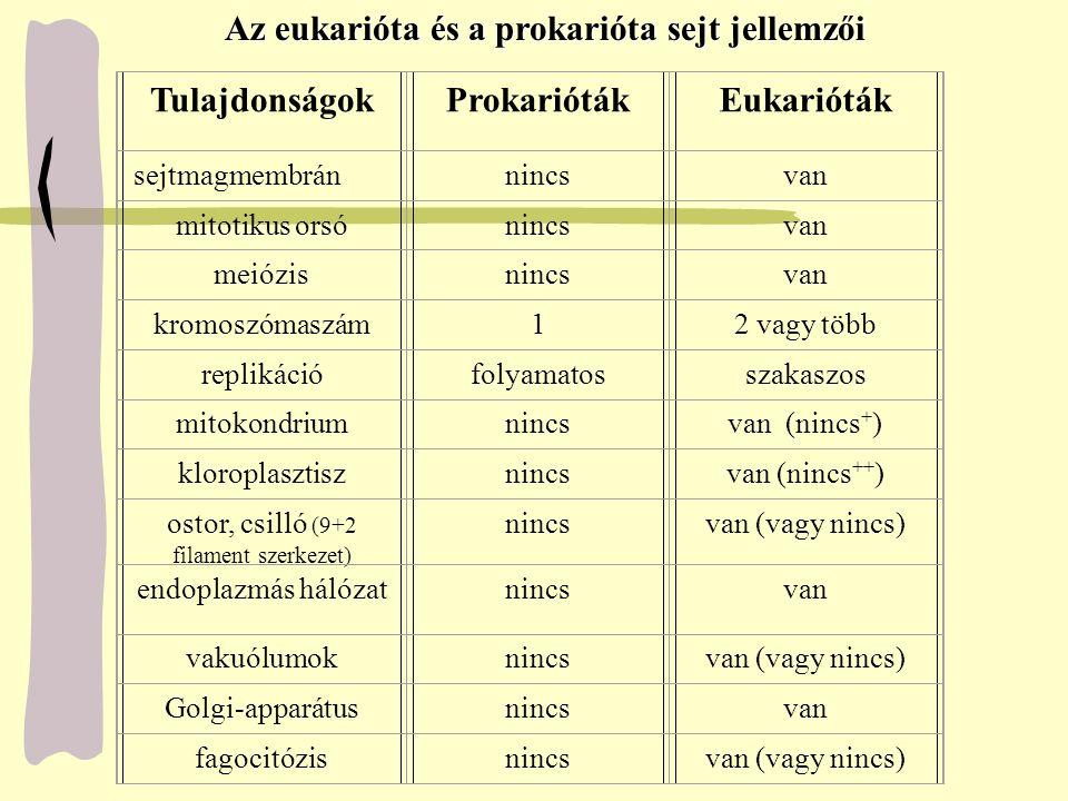 Tulajdonságok Eukarióták