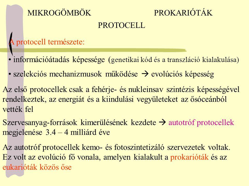 MIKROGÖMBÖK PROKARIÓTÁK. PROTOCELL. A protocell természete: információátadás képessége (genetikai kód és a transzláció kialakulása)