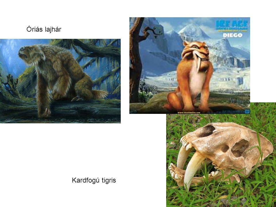 Óriás lajhár Kardfogú tigris