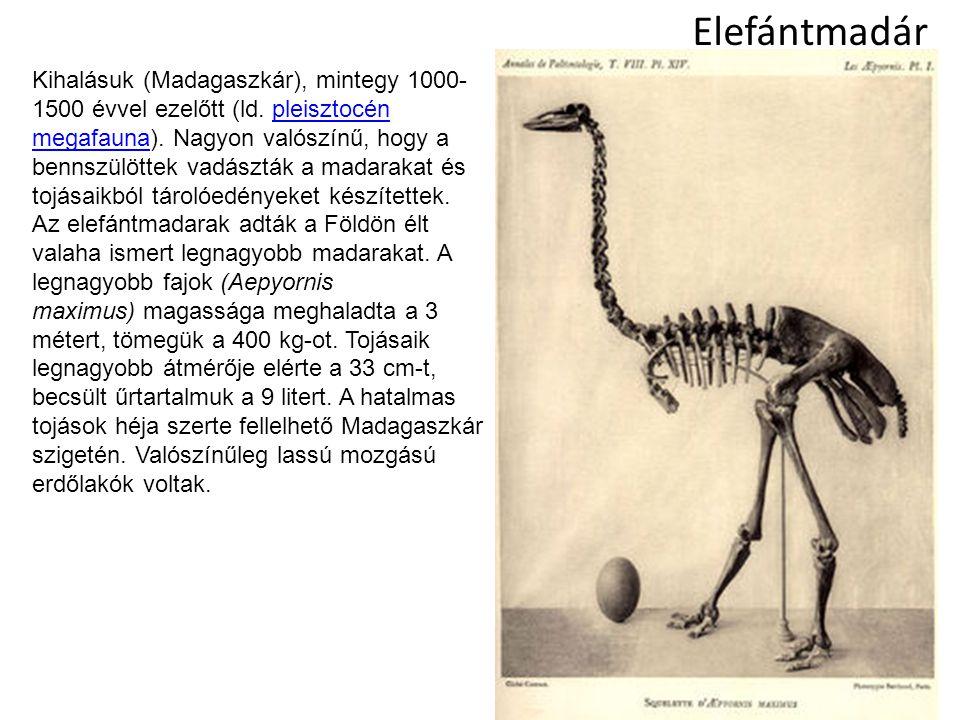 Elefántmadár