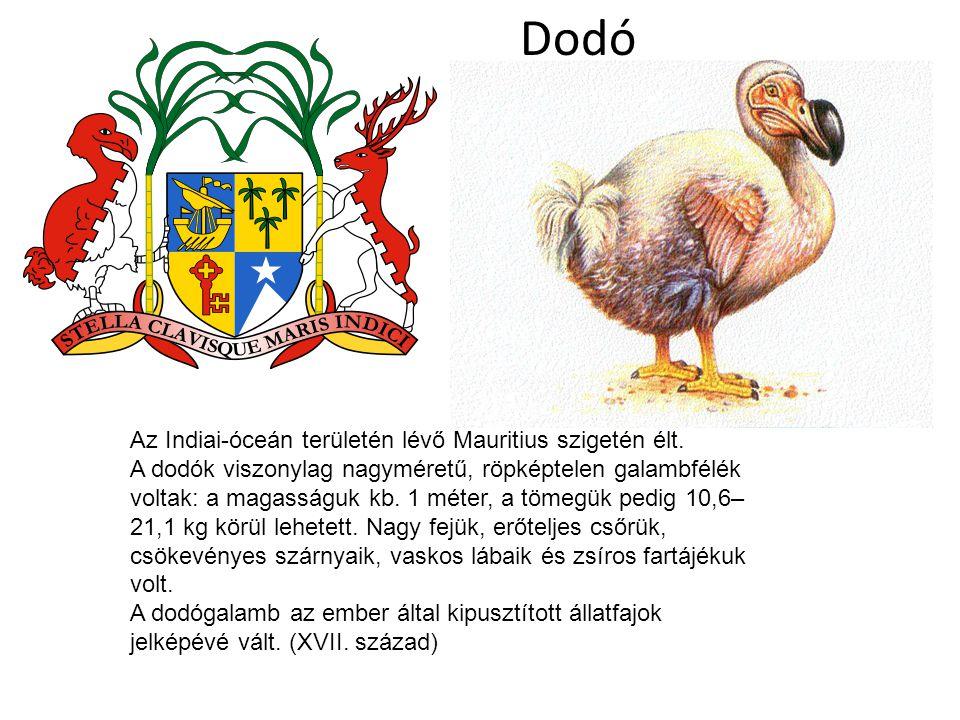 Dodó Az Indiai-óceán területén lévő Mauritius szigetén élt.