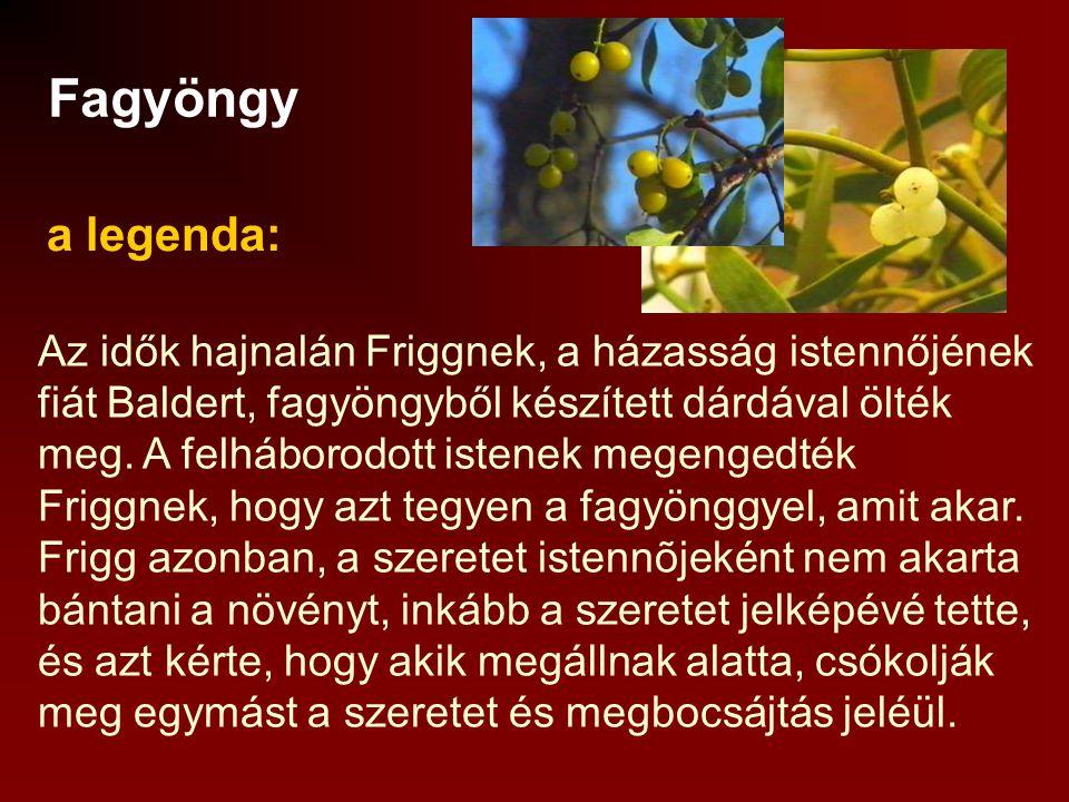 Fagyöngy a legenda: