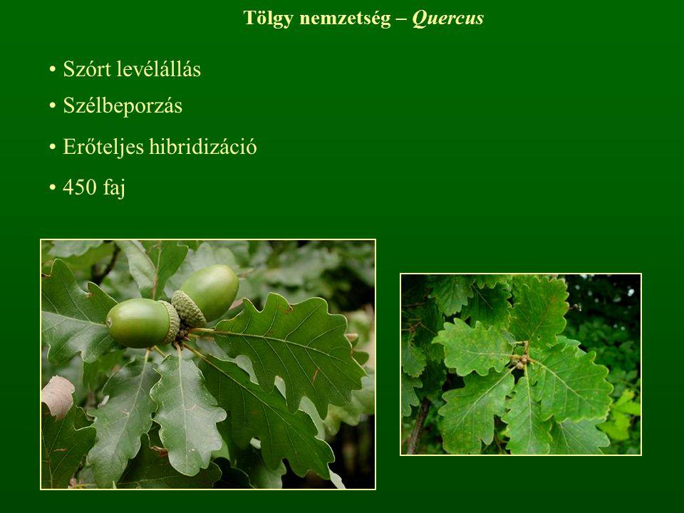 Tölgy nemzetség – Quercus