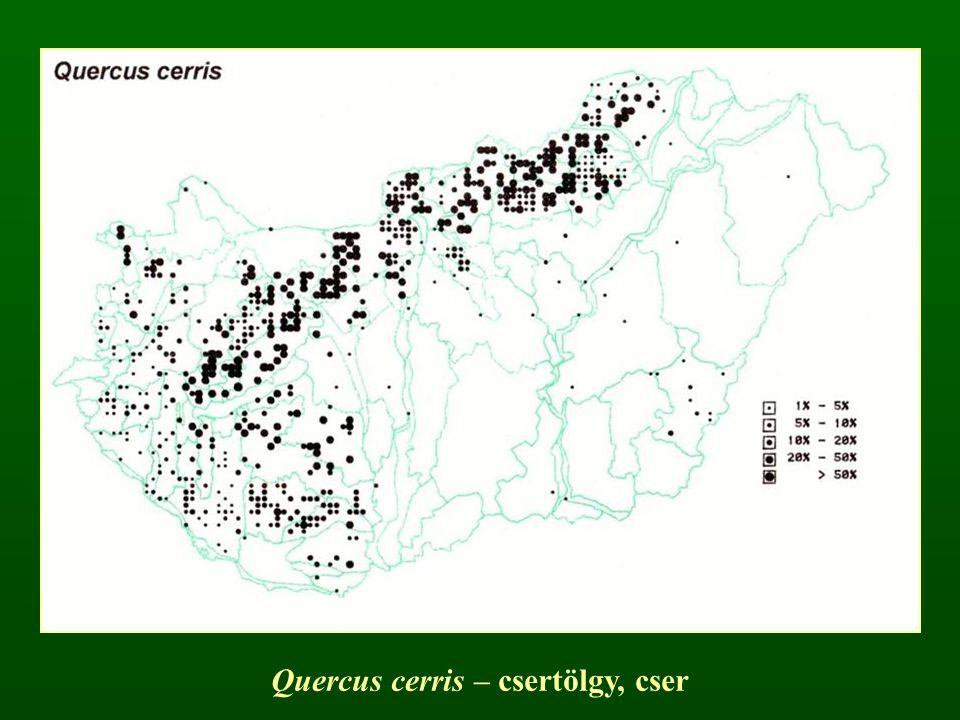 Quercus cerris – csertölgy, cser