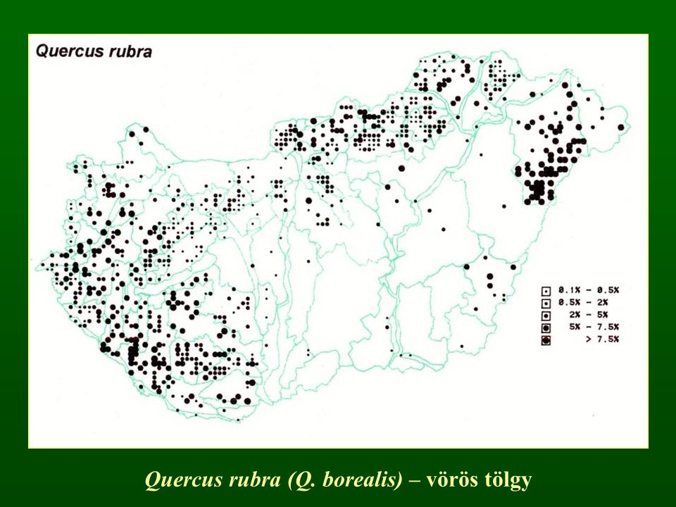 Quercus rubra (Q. borealis) – vörös tölgy