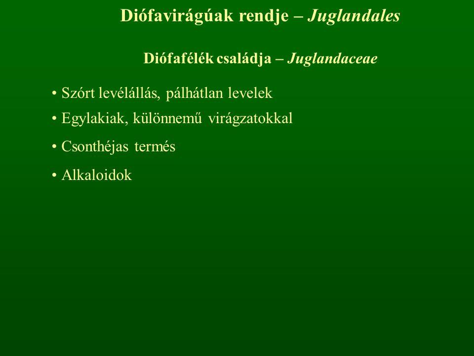 Diófavirágúak rendje – Juglandales Diófafélék családja – Juglandaceae