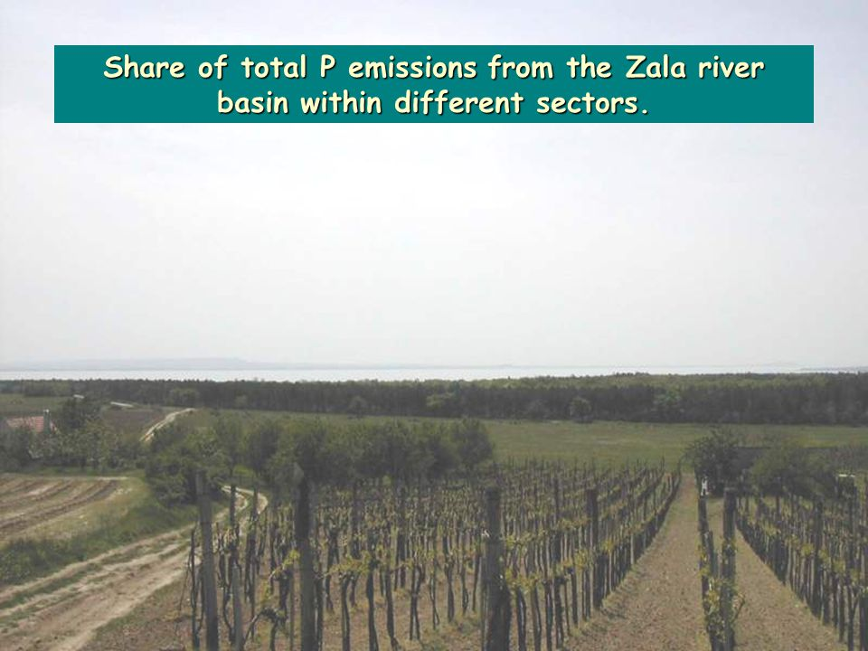 Share of total P emissions from the Zala river basin within different sectors.