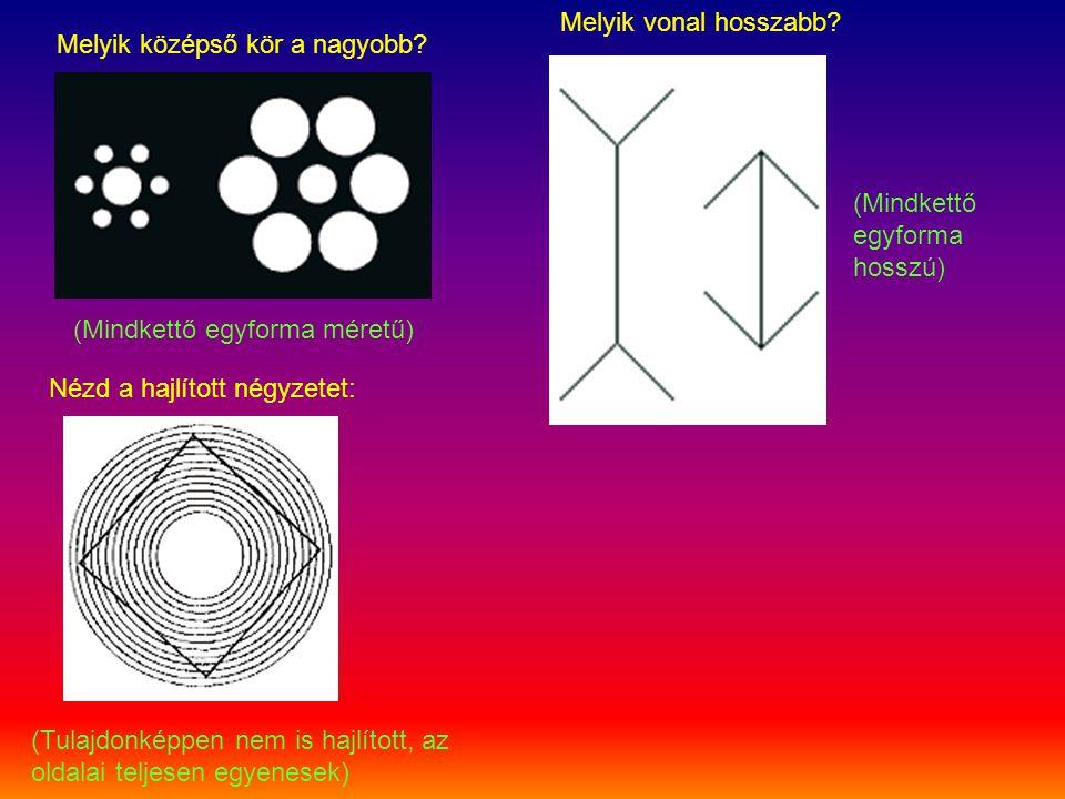 Melyik vonal hosszabb Melyik középső kör a nagyobb (Mindkettő egyforma hosszú) (Mindkettő egyforma méretű)