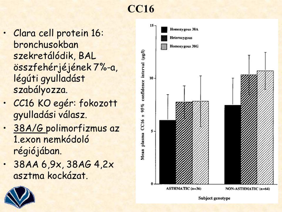 CC16 Clara cell protein 16: bronchusokban szekretálódik, BAL összfehérjéjének 7%-a, légúti gyulladást szabályozza.