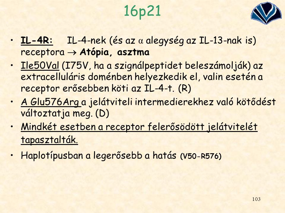 16p21 IL-4R: IL-4-nek (és az α alegység az IL-13-nak is) receptora  Atópia, asztma.