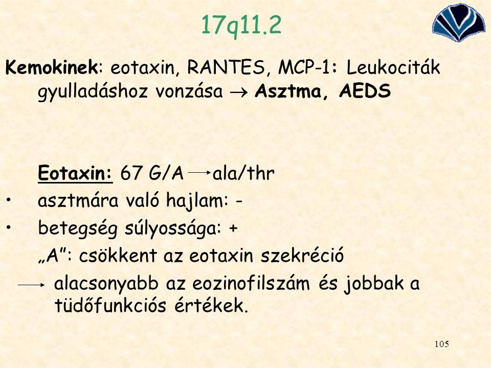 17q11.2 Kemokinek: eotaxin, RANTES, MCP-1: Leukociták gyulladáshoz vonzása  Asztma, AEDS. Eotaxin: 67 G/A ala/thr.