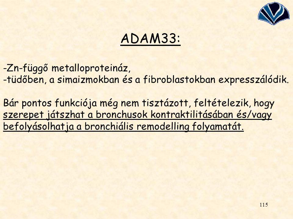 ADAM33: -Zn-függő metalloproteináz, -tüdőben, a simaizmokban és a fibroblastokban expresszálódik.